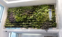 ModuloGreen Living Walls