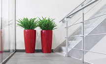 Interior Landscaping Services